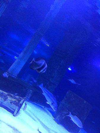 Aqua Vega Aquarium : photo9.jpg