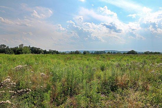 Cazenovia View