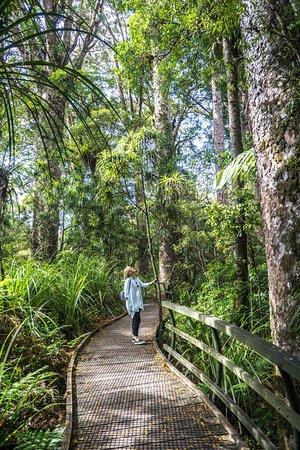 Kerikeri, Neuseeland: Boardwalk