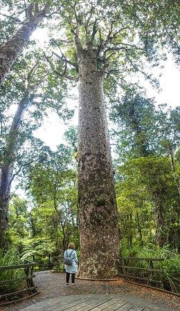 Kerikeri, Neuseeland: Impressive trees