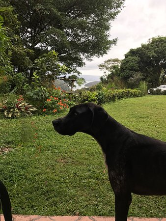 Nuevo Arenal, Κόστα Ρίκα: A breathtaking view from the front porch, one of the sweet dogs and a glimpse of one bird specie