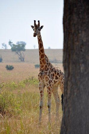 Watalii Safaris