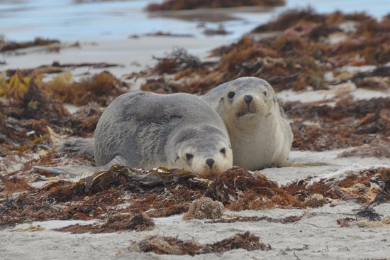 Southern Ocean Lodge: Cute Cubs