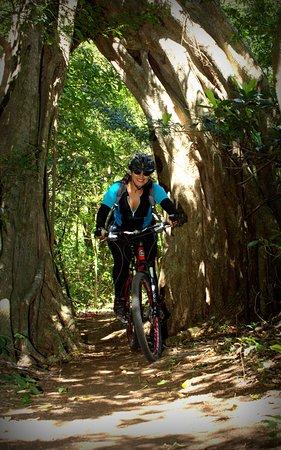Hacienda Guachipelin: ridding through a tree