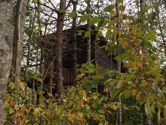 Robbinsville, Karolina Północna: #2 Yellow Pine