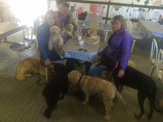 Wotter, UK: Dog Friendly