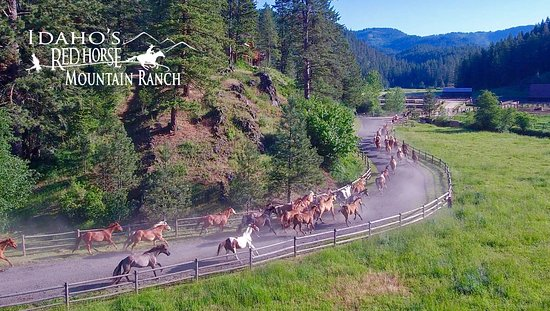 Harrison, ID: Bringing the horses in!