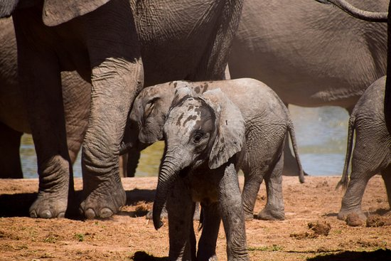 Addo, South Africa: Cant get enough Elephants on this excursion
