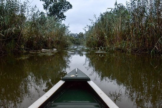 Addo, Sør-Afrika: Organised excursion up the river by canoe at dawn