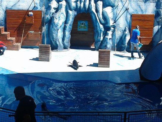 Villa Carlos Paz, Argentina: show de lobos marinos...
