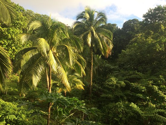 Marigot, دومينيكا: View from the veranda