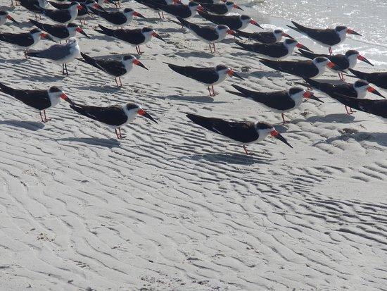 Fort Island Gulf Beach 이미지
