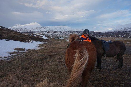Polar Hestar : Icelandic horses and our lovely guide!