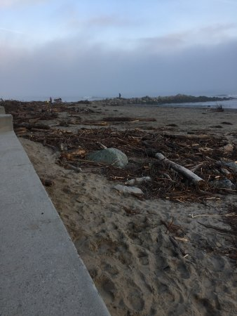 Capitola City Beach: Capitol Beach February 4, 2107.