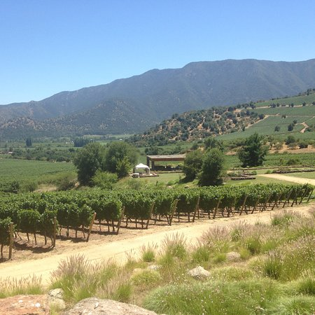 Santiago Metropolitan Region, Chile: Wine tasting in Cachapoal Valley