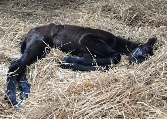 Nicholasville, KY: A foal just born that morning.