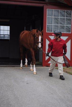 Nicholasville, KY: California Chrome