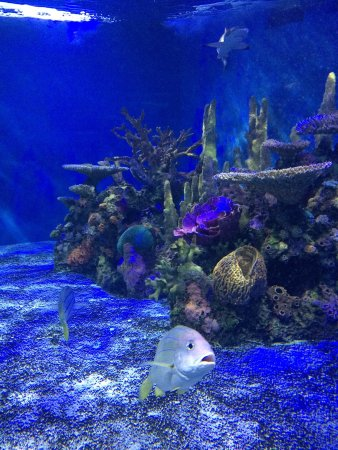 Niagara Aquarium Seals Habitat Picture Of Aquarium Of