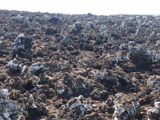 Puerto Villamil, Ecuador: The rocks in a pathway at Las Tintoreras