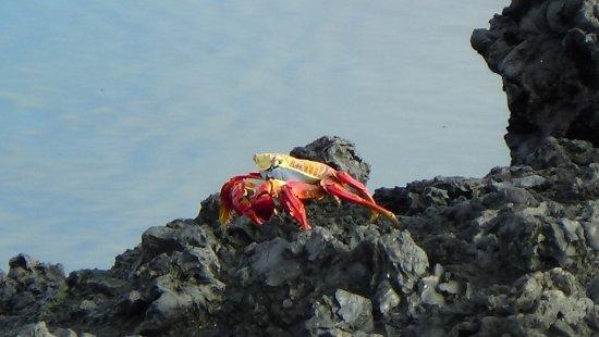 Puerto Villamil ภาพถ่าย
