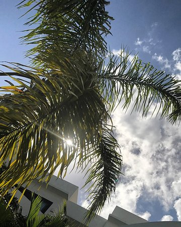 Intima Resort Tulum: Palm trees provided plenty of shade.