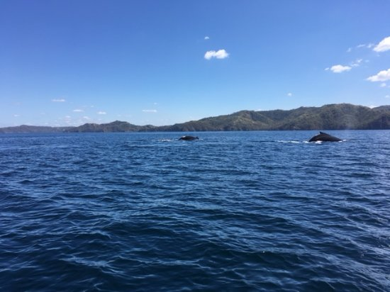 Issys Tours Costa Rica: Humpback whales