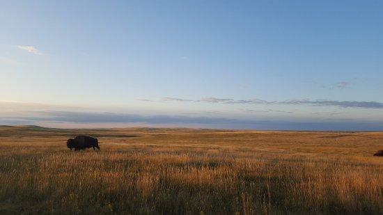 Loop Road: Bandlands National Park