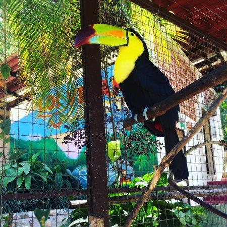 Los Veranos Canopy Tour: photo0.jpg