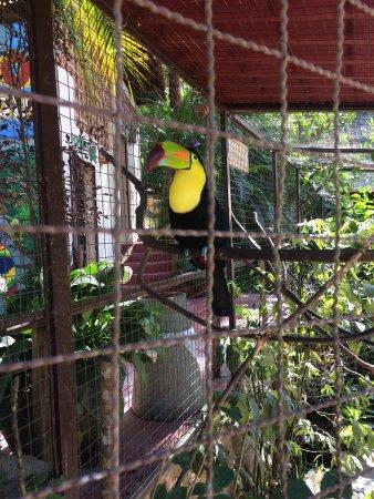 Los Veranos Canopy Tour: photo1.jpg
