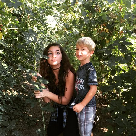 Oak Glen, Californië: niece and nephew in the blackberry bushes