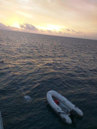 Pro Dive Cairns Day Trips : AAAAAA