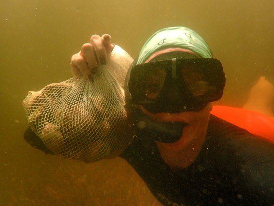River Safaris And Gulf Charters: Fruitful Scallop Harvest