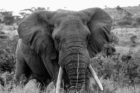 KwaZulu-Natal, Afrika Selatan: photo2.jpg