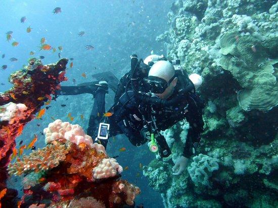 Sunshine Divers Club - Sharks Bay: Hausriff auf 30m
