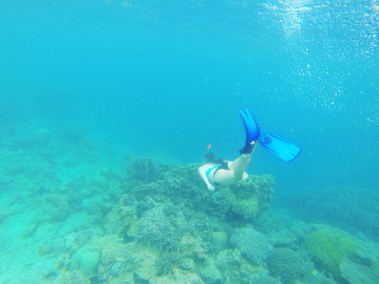 Kasa Divers照片