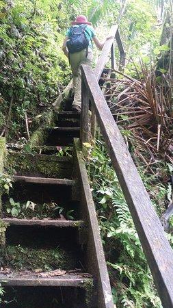 Sendero Los Quetzales (The Quetzales Trail): steps