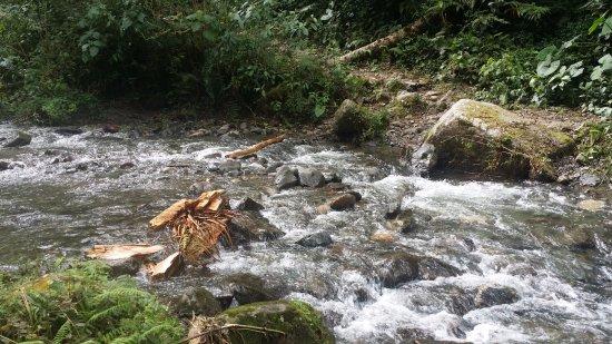 Sendero Los Quetzales (The Quetzales Trail): river to ford