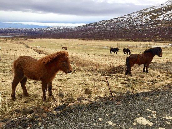 Isafjordur, Ισλανδία: photo1.jpg