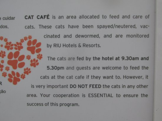 Hotel Riu Palace Madeira: Cat Cafe