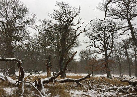 Jægerborg Dyrehave: Jaegerborg park in winter