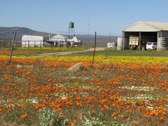 Garies, Sudáfrica: Mostersvlei Farm, near Dwalita's Klipkraal Camping place