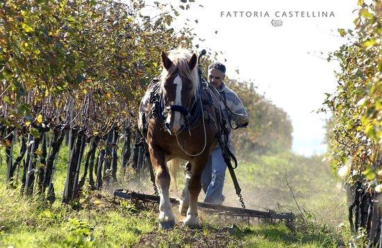 Capraia e Limite, Italia: Cavalli