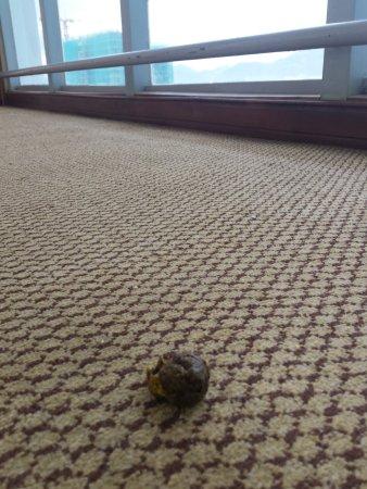 Nha Trang Lodge: Какашечка в коридоре на 11 этаже.