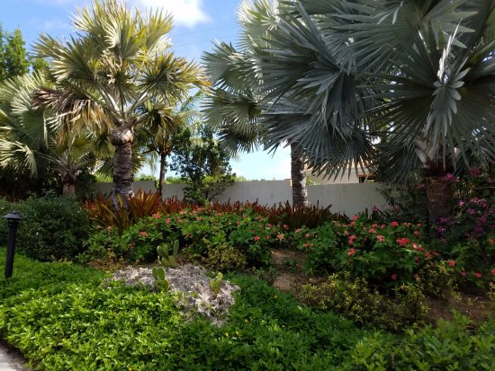 West End Village, Anguilla: Flower and plantings are gorgeous.