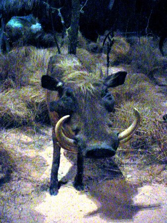 Anniston Museum of Natural History - Another Animal Exhibit