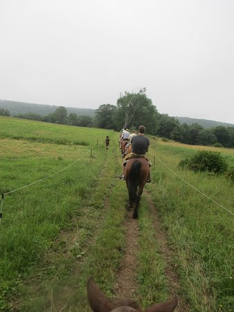 White Haven, Pensilvania: Our family horse backing riding through a field