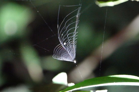 The Night Tour with Tracie The Bug Lady: Ray Spider Web