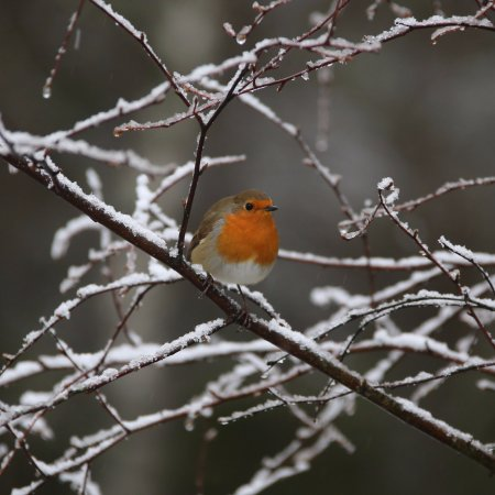 Aviemore, UK: Lots of birds