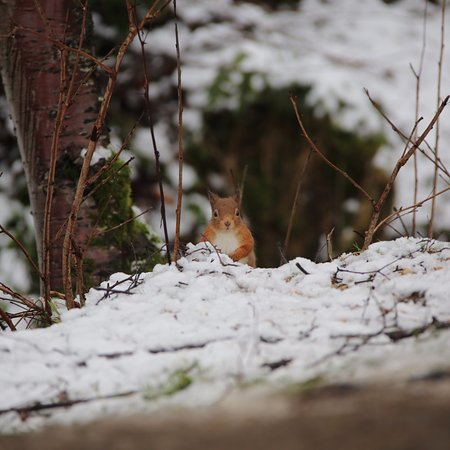 Highland Wildlife & Birdwatch Safaris : Red squirrel