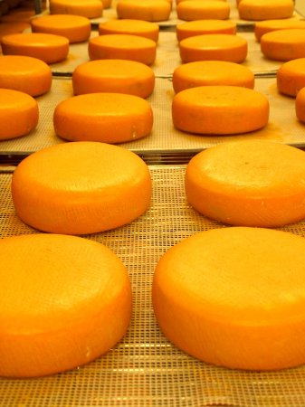 Jordan Station, Canada : Niagara Gold, our signature cheese - aging for 5 months!